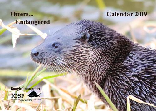 IOSF 2019 Calendar